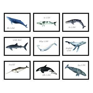 Boys Girls Bedroom Living Room Animal Whale Prints Wall Art Posters - UNFRAMED