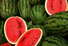 200 Jubilee Watermelon Seeds Melon 95 days