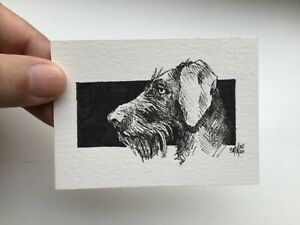 ACEO original art. Drathaar Dog. Ink