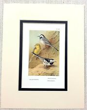 Yellow Throated Vireos /& Dogwood By Saron Print 1970s Size 16x12 Inches Unused