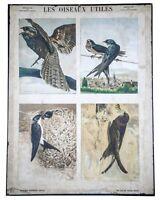 French Chromolithography 1879 birds school prints school aid