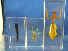 3 Insect Educational Taxidermy Specimen Leaf Insect ? Lucite Paperweight