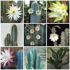 100 seeds of  Cereus mix,seeds cacti mix, succulents seeds mix   C