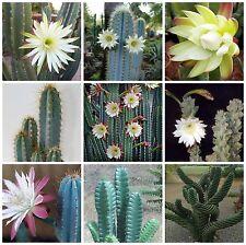 100 seeds of  Cereus mix,seeds cacti mix, succulents seeds mix   C