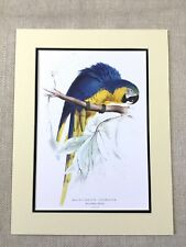 Antique Parrot Print Macaw Parrots Blue and Yellow Gold Rare Exotic Birds