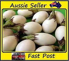 Eggplant Seeds Organic White Egg Shaped Eggplants Easy Grow Plant 100 Seed Lots