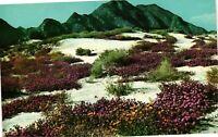 Vintage Postcard - Springtime in The Desert Verbenas In Bloom Un-Posted #3982