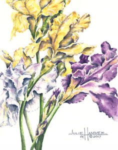 """""""Iris on White"""" 5x7 double-matted Watercolor Art Print by artist, Julie Hammer"""