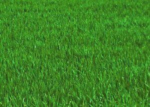Kein Moosvernichter ! Der Moosverdränger ohne Gift für 250 m² +1/2kg Rasendünger