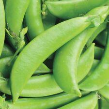 Gemüse Erbse Zucker Ann Zuckerschote Typ 60 Samen