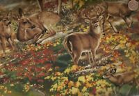 Deer in the forest Timeless Treasures wildlife  fabric