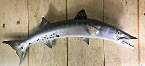 Gorgeous Barracuda Replica Taxidermy Full Fish Mount - Famous Original Owner