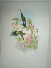 John Gould Hand Coloured Lithograph PHAETHORNIS YARUGUI White-whiskered hermit