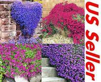 100 Creeping Thyme Seeds G25, G46~G48 Groundcover Seeds Garden Perennial Flowers