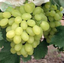 30 Seeds / Pack Green Sweet Kyoho  Grape Advanced Fruit Natural Growth Grape Del