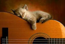 Art Print  Guitar Kitten Sleeping Cat  poster