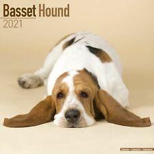 Basset Hound Calendar 2021 Premium Dog Breed Calendars
