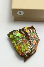 8) Natural Ammolite Gemstone Canada ~ Mineral Ammonite Fossil Crystal