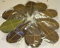 50 Seemandelbaumblätter ca.10-15cm - Catappa-Leaves in Tüten - Garnelen Diskus