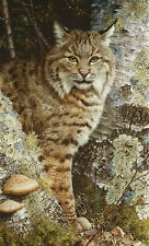 """Forest Sentinel"" Carl Brenders Limited Edition Fine Art Giclee Canvas - Bobcat"
