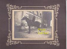 Superbe portrait d'un cavalier à cheval - Dragon / Cuirassier / Artilleur