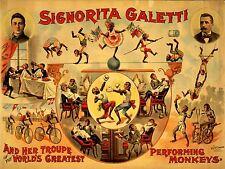 ADVERTISING CIRCUS SIGNORITA GALETTI PERFORMING MONKEYS ART POSTER PRINT LV621