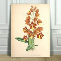 """JEAN LINDEN - Beautiful Yellow & Red Orchid #8 - CANVAS ART PRINT POSTER -36x24"""""""