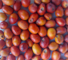 Free Shipping 10 seeds Texas Mountain Laurel, Mescal Bean Sophora secundiflora
