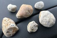 Honeycomb Fossil Corals Lake Michigan Charlevoix Lapidary Petosky Stone #456