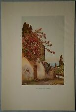 """CANARY ISLANDS, TENERIFE: """"El Sitio del Gardo"""", color plate, 1911. (#9)"""