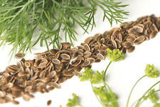 500+ DILL BOUQUET SEEDS | A NON-GMO Heirloom Herb, Spice, Culinary Flower