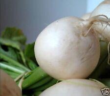 300 WHITE EGG TURNIP Brassica Rapa Vegetable Seeds
