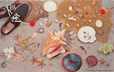 BROWNSVILLE TX 1963 Shells, Coral & Other Treasures From the Sea VINTAGE GEM+++