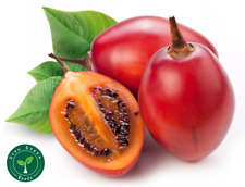 20 seeds of Tamarillo - SOLANUM BETACEUM - Tomato Tree + 5 seeds of Sunflower