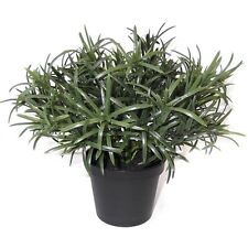 19cm Artificial Potted Rosemary Plant - Decorative Plastic Herb Plant in Pot