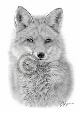 FOX pencil / graphite print A4 / A3 signed by UK artist drawing artwork