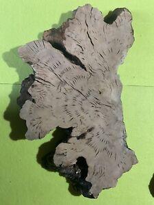 legno Radica di ulivo / Olivo