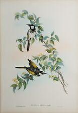 ORIGINAL  Hand Colored Lithograph  John Gould, Birds of Australia
