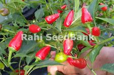 Mini Jalapeno Red Chilli - A Medium Hot, Beautiful & Unique Chilli Variety