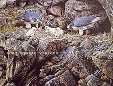 PEREGRINE FALCON FAMILY Alan Hunt Signed & Numbered w/coa Fine Art Print