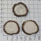 3 #1 XL Elk Antler Rosettes Burrs Belt Buckles Bolos Crafts