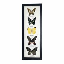 More details for vie naturals taxidermy butterfly frame, 39x14cm, assorted, 5 butterflies
