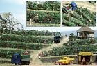 OO/HO Grapevines Scenery:plants with bunches+baseplates - Busch 1200 P3