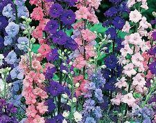 ROCKET LARKSPUR FLOWER SEEDS - MIX *****
