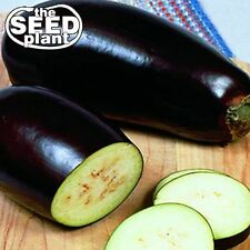 Black Beauty Eggplant Seeds - 150 SEEDS-SAME DAY SHIPPING