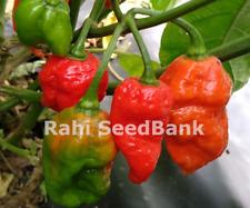 Jigsaw X Carolina Reaper Chilli - 2 World's Hottest Chillies in One - OZ Grown