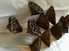 12pc Large Lotus Pods Picks Basket Gourds Floral Decor Crafts