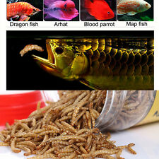 Aquarium Fish Food Dried Mealworms for Pet Turtle Reptile Birds Chicken Koi Feed