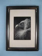 Small Black & White Eagle Head Framed & Matted Picture R Levy Drawing Glass (O)