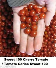 MINI SMALL Tomato RED Cherry SWEET 100 Heirloom 20 Seed TINY high Yielding GIFT+